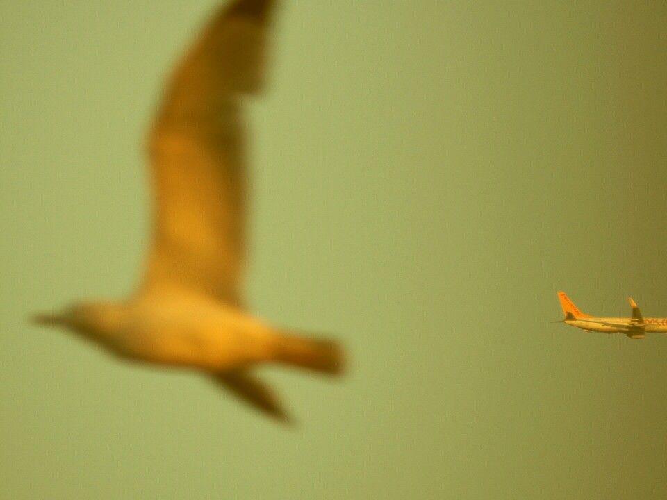 Kuş açısı