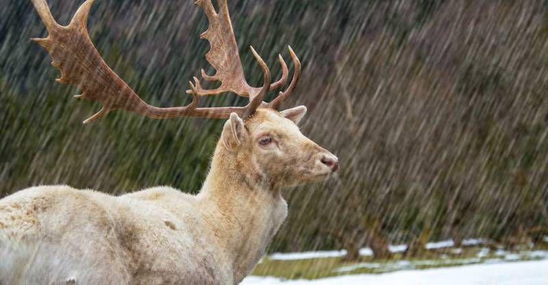 Deer hunting in the rain after the rain deer hunting