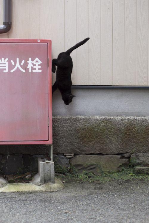 land-like-a-cat:  via年末総ざらい - 猫に逢いに行こう