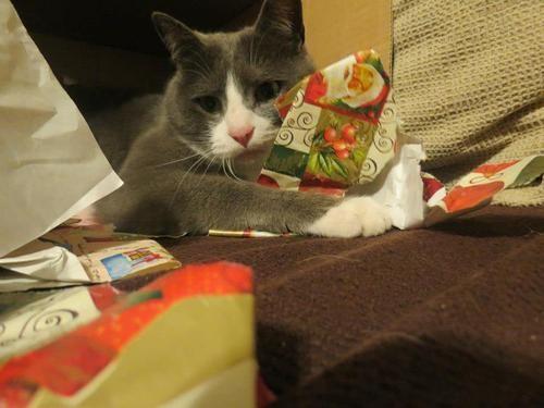 ラブリー Kittycats Fuckyeahfelines 猫のためのクリスマス トン 子猫 キティ 猫