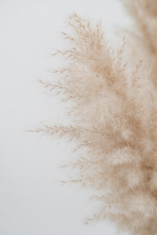 ELLE INTERIEUR   blog interior & living pampasgras Patty Bubness ...