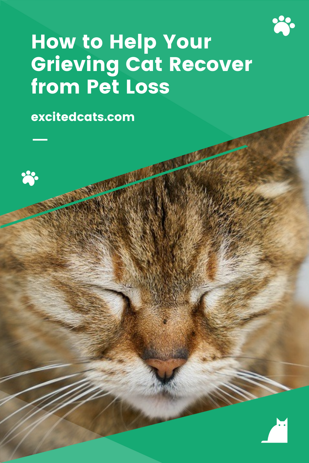 How To Help Your Grieving Cat Recover From Pet Loss In 2020 Cats Pet Loss Pets