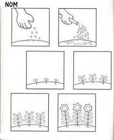 stappenplan zonnebloem planten zoeken