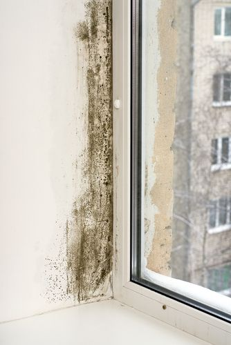 Mould Growth On Window Panes And Sills Don T Panic