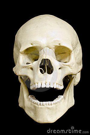 Cráneo | Anatomía: Cráneo / Skull Anatomy | Pinterest | Anatomía