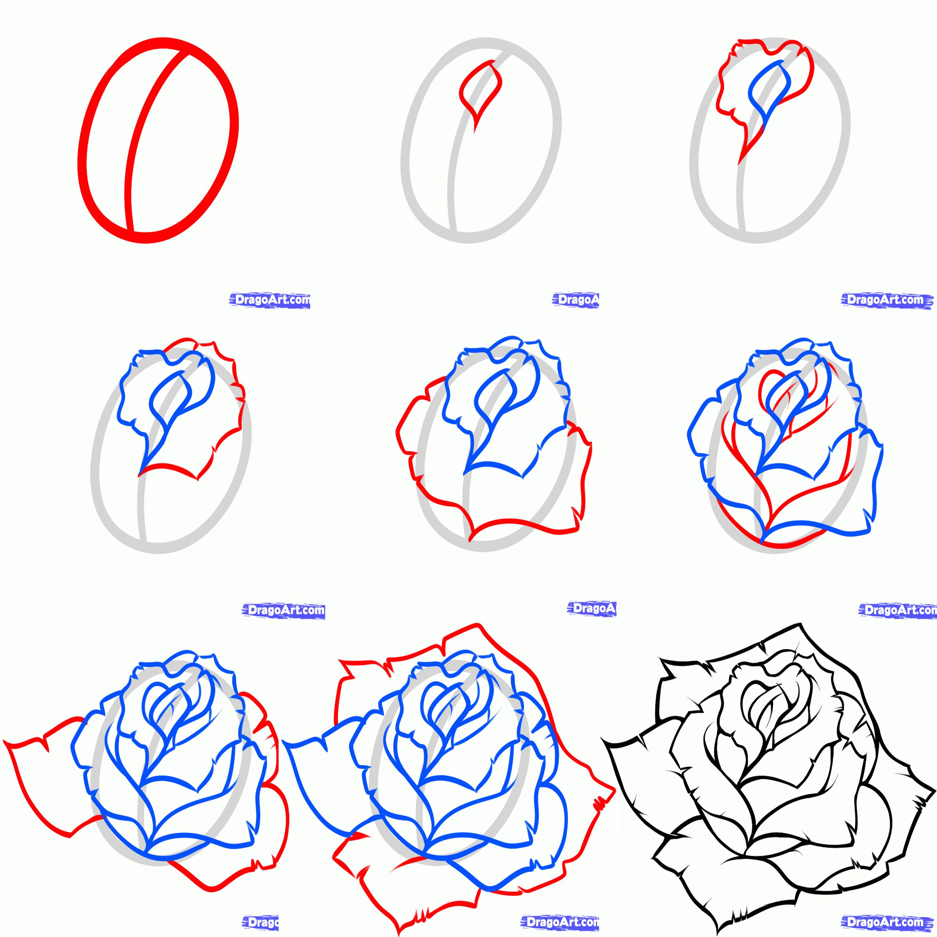 How to draw a rose step by step Roses drawing, Flower