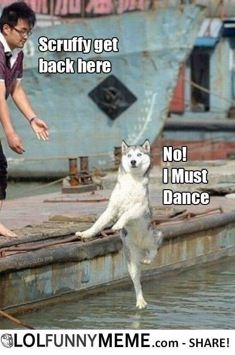 #DancingDog