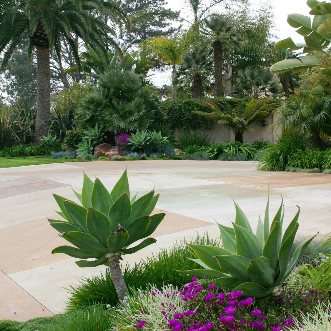 We Used A Variety Of Drought Resistant Plants And Flowers 640 x 480