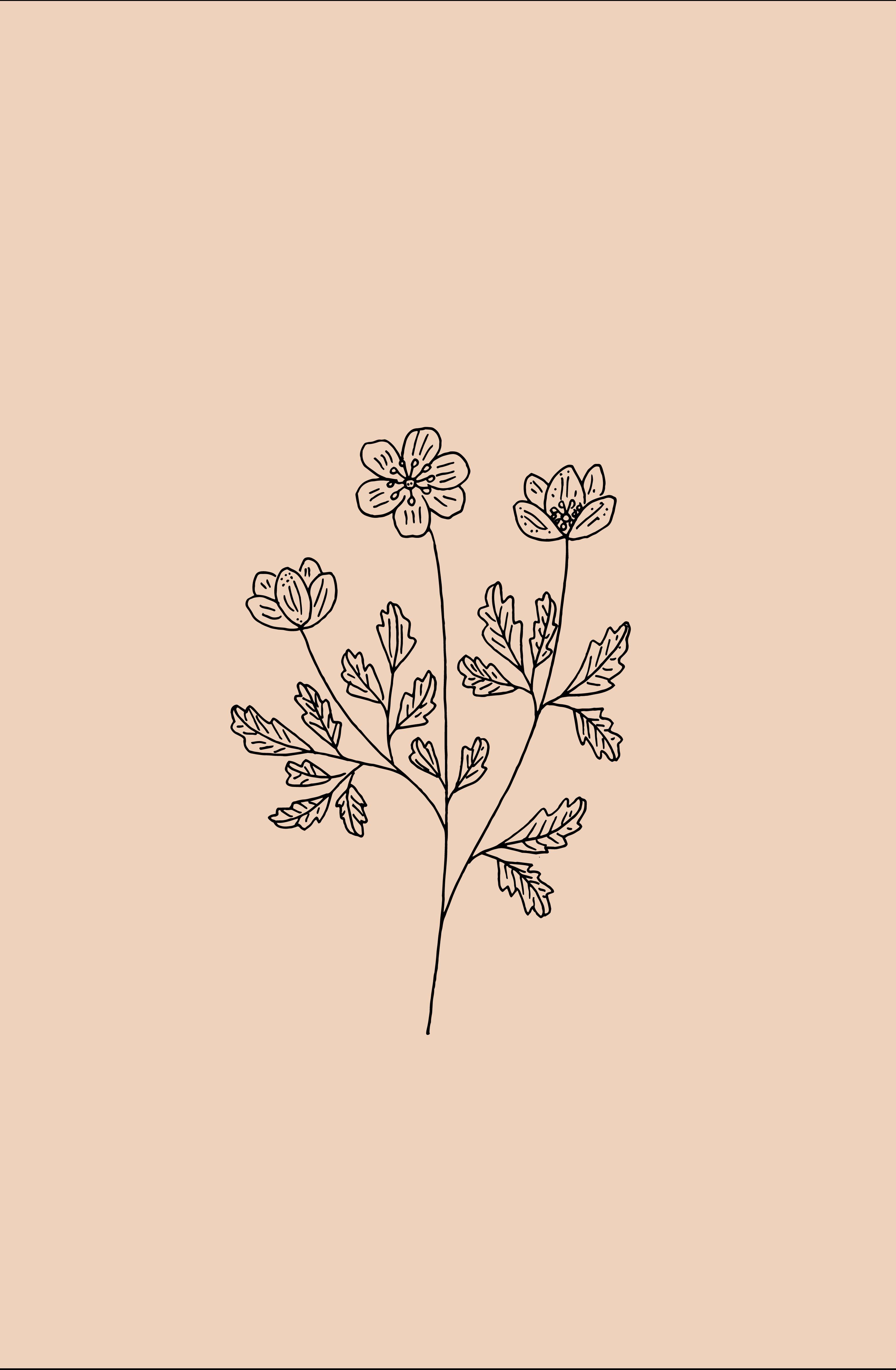 6c00ff1c1107c598021de03a1176e3b0 » Aesthetic Flower Drawing