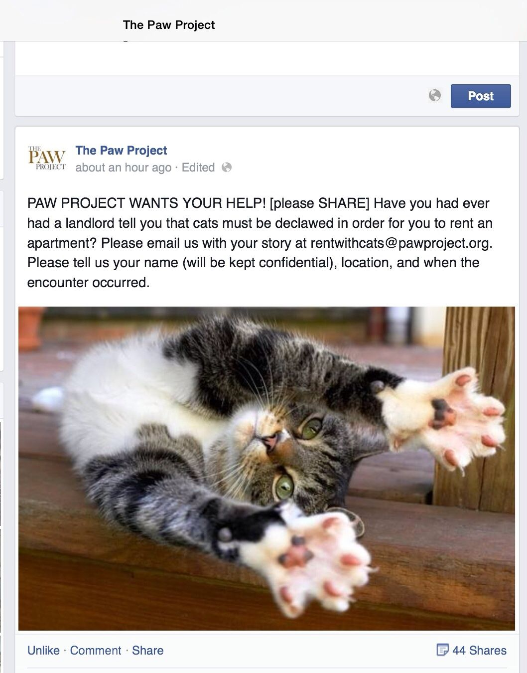 Attention All Renters Did Your Landlord Tell You To Declaw Your