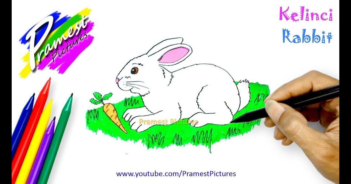 Gambar Sketsa Katak Yang Mudah How To Draw Rabbit Animal Coloring Pages For Kids 27 Contoh Langkah Demi Langkah Cipta Sketsa Hewan Menggambar Sketsa Sketsa