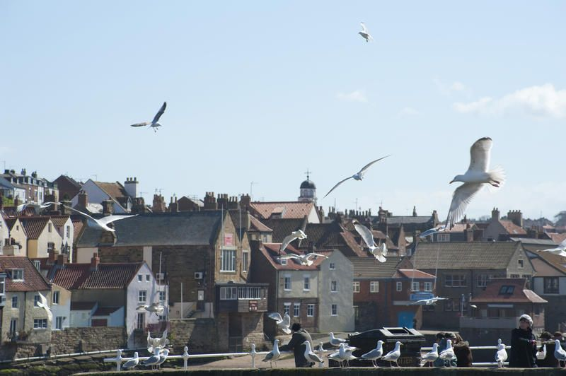 Free Stock Photo: Seagulls flying and wheeling above the harbour at Whitby on the Yorkshire coast - By freeimageslive contributor: photoeverywhere