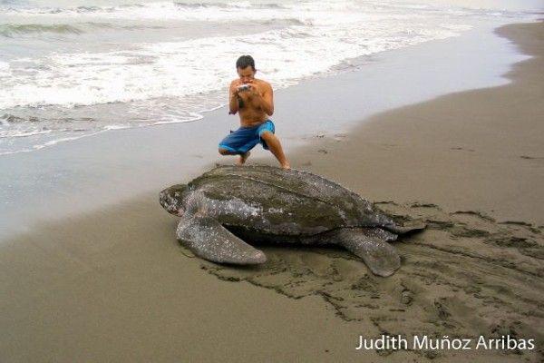 Playa Baula, Costa Rica