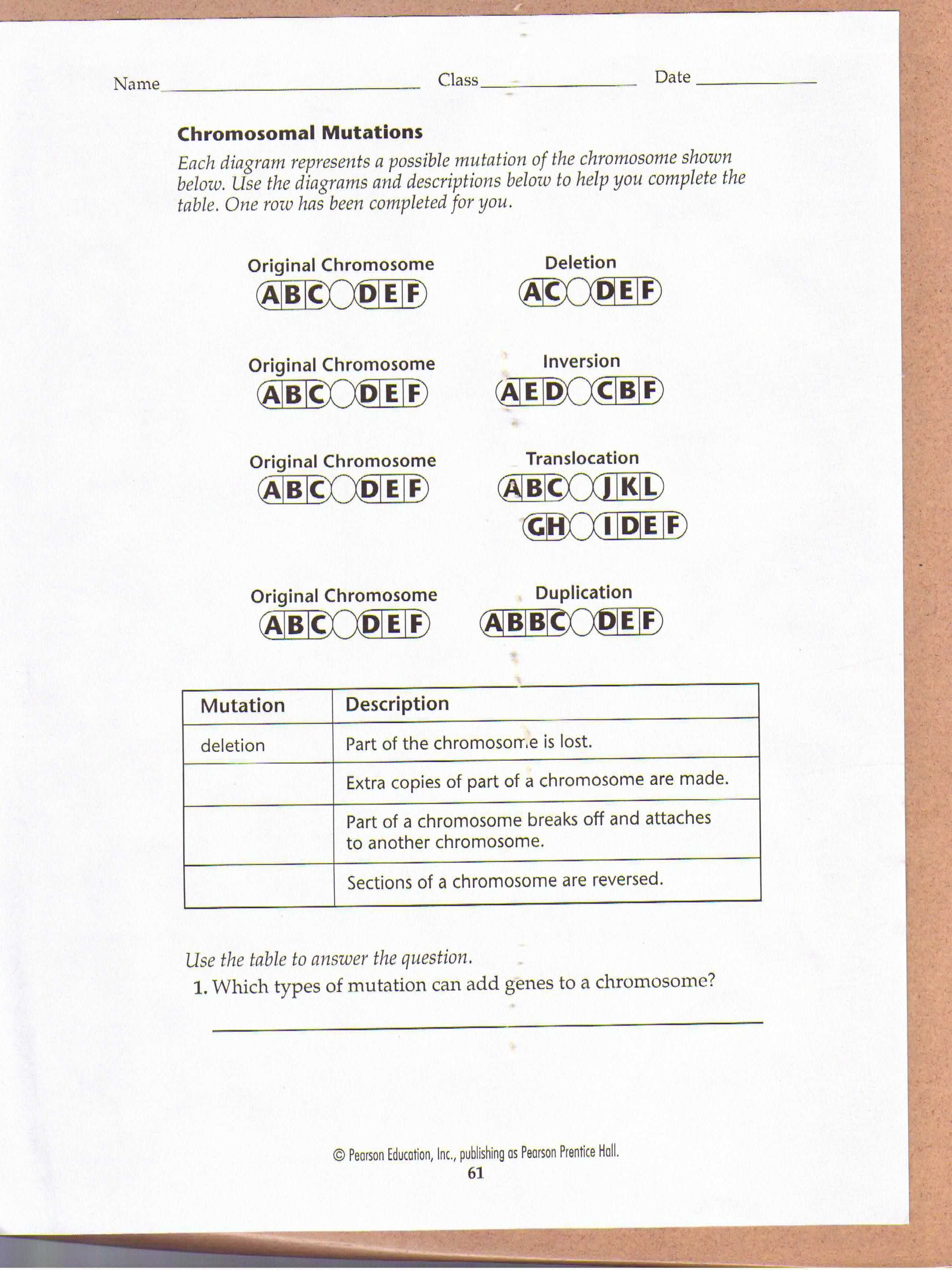 worksheet Chromosomal Mutations Worksheet chromosomal mutations worksheet education pinterest worksheets worksheet
