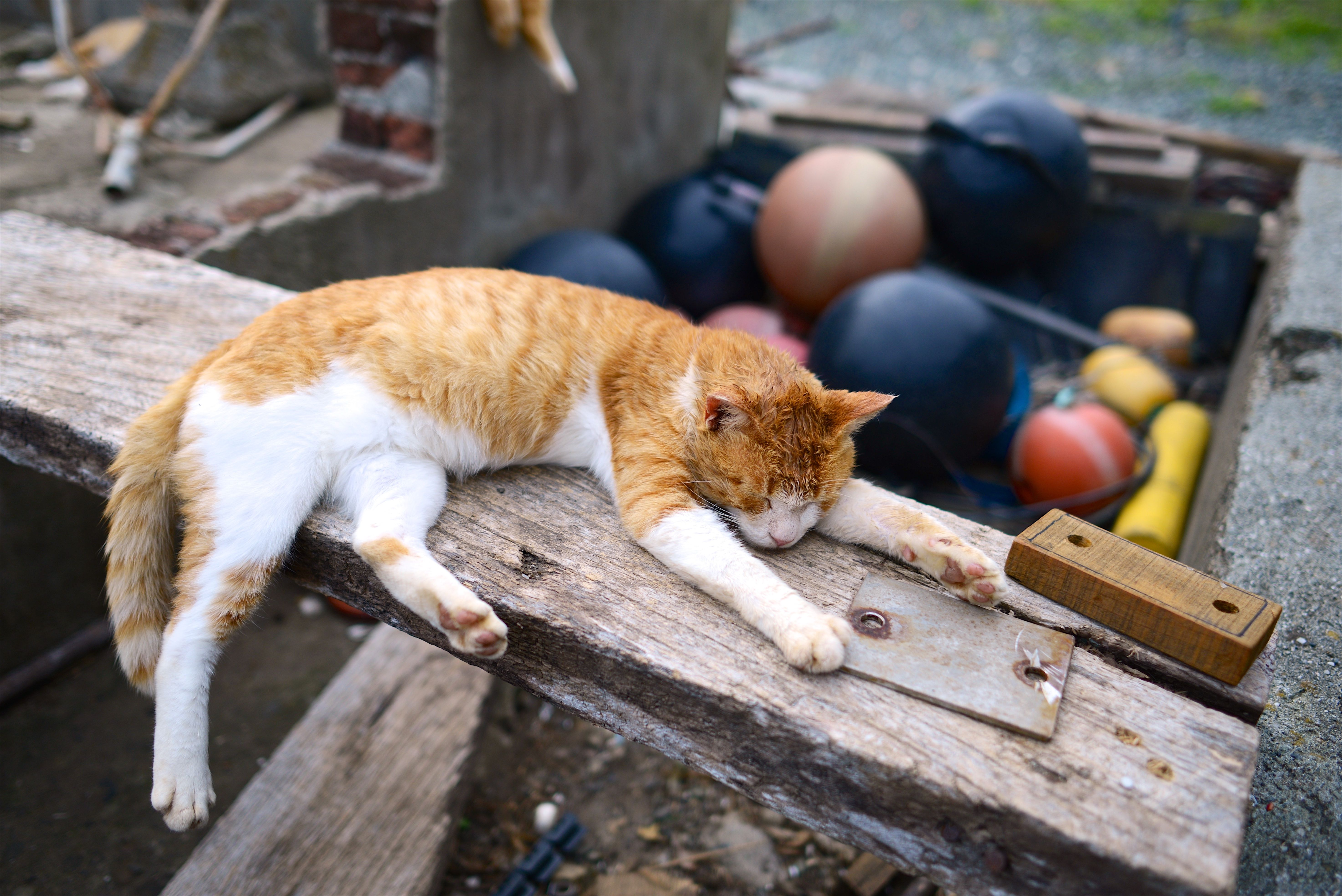 Animal Sounds To Make You Feel Less Alone The Ambient Mixer Blog Tabby Cat Cat Sleeping Tabby Cat Pictures