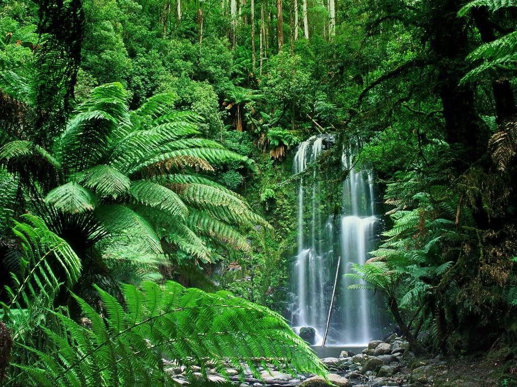 Free Download Tropical Rainforest Backgrounds 4 9988 Full Size Waterfall Wallpaper Waterfall Photo Forest Waterfall