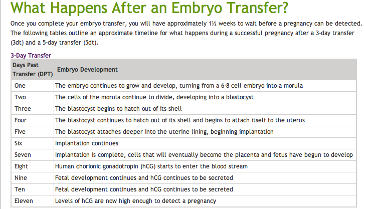 What happens after an embryo transfer | Test tube babbies | Ivf