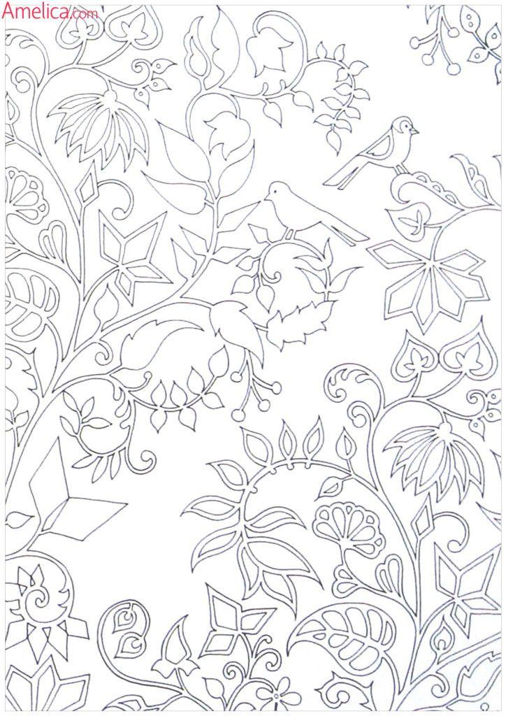 раскраски взрослые волшебный сад, зачарованный лес