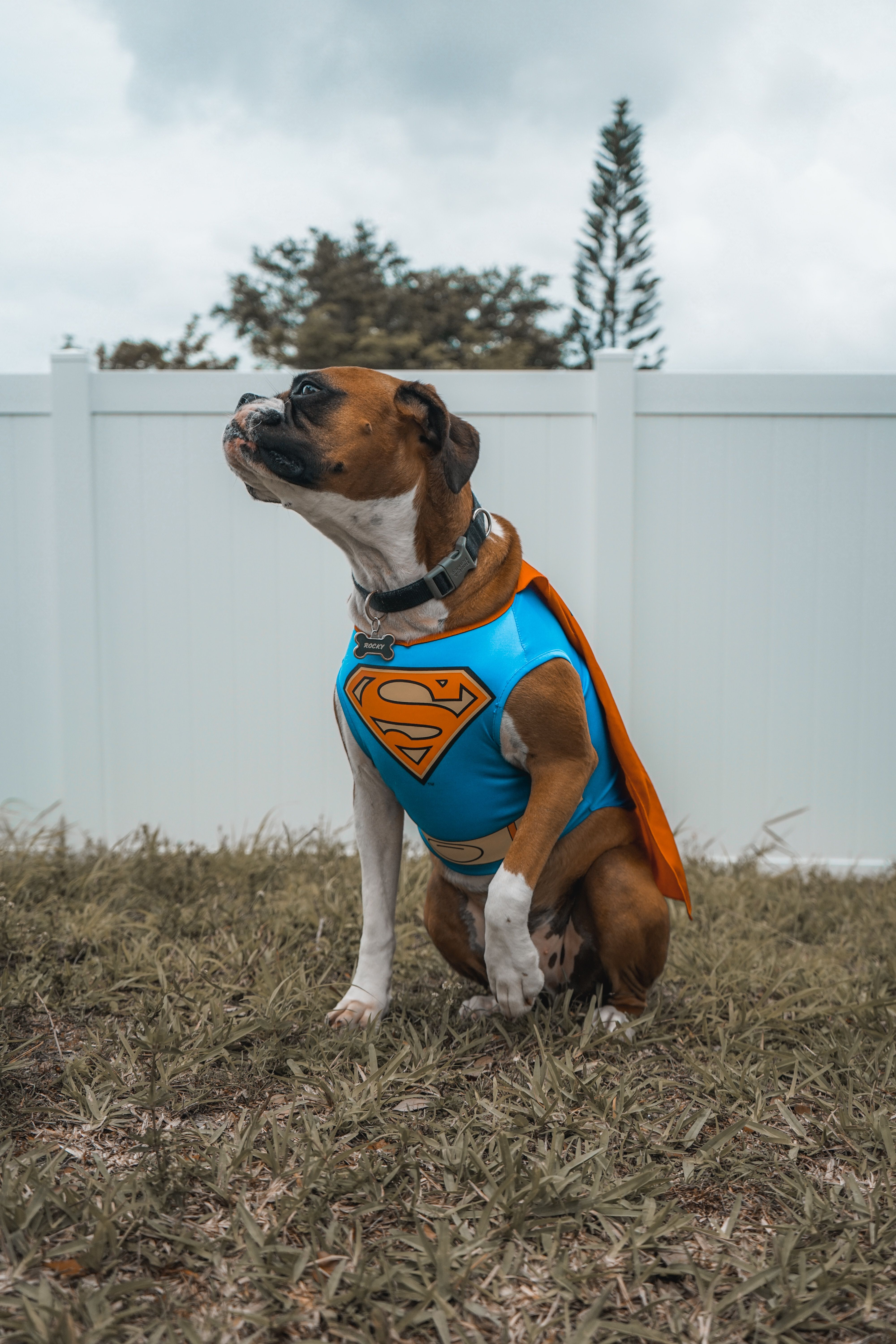 Halloween Month Is Already Here And So Is Petkoolmart S Costumes