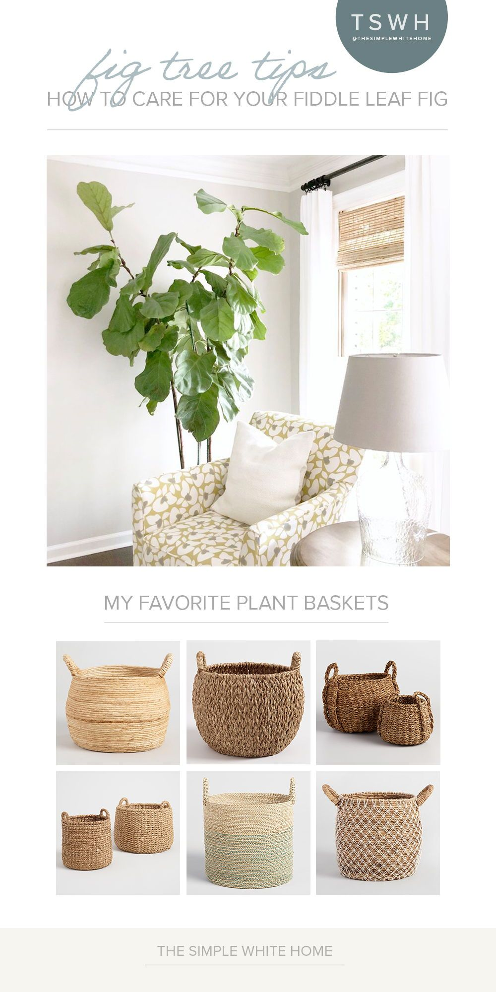 If you know me, you know I'm pretty obsessed with my fiddle leaf fig trees. I would have one in every room if I had the right light. I'm definitely no horticulturist but have learned how to take care of these little babies over the years and wanted to share some of my favorite tips. I really hope they help you start to love your fig instead of being intimidated by their finicky ways. #figtree #fiddleleaffig #fiddleleaffigtree #fiddlefig #fiddleleaf #fiddlefigtree #plants #houseplants