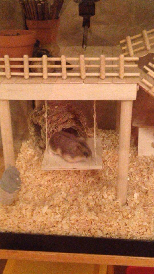 Hamster Cage DIY aquarium conversion. Russian Campbell's