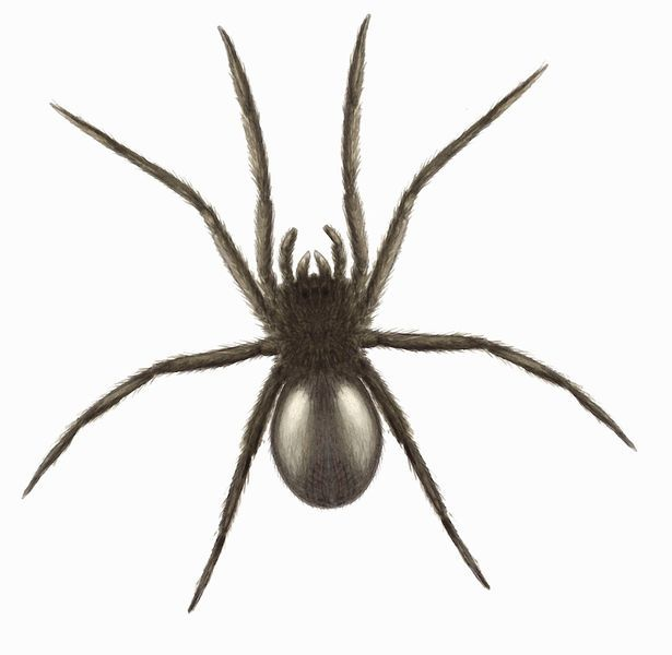 10 Common Spiders You Might Find At Home And Whether