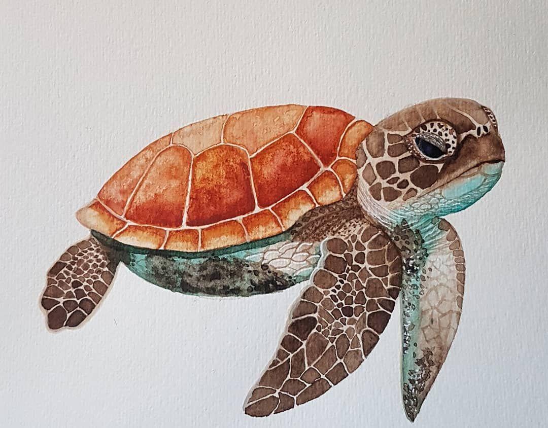 Sea Turtle In Watercolor Turtle Seaturtle Watercolor Art