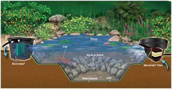 Image result for duck biofilter pond | Ponds backyard, Diy ...
