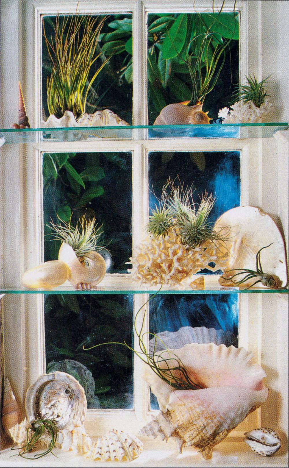 The Indoor Garden Book, John Brookes ©1986 | Indoor garden