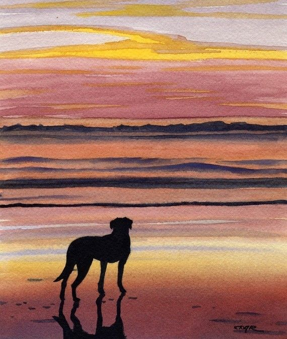 Black Lab Art Print By Watercolor Artist Dj Rogers Dog Art