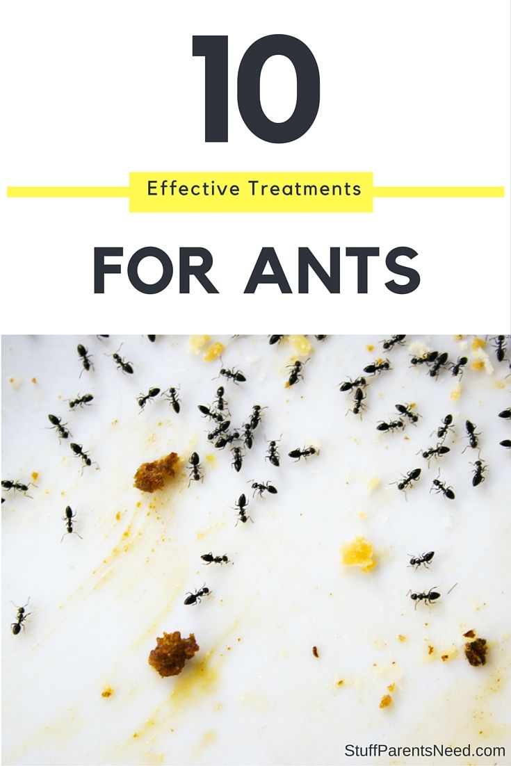 How can i get rid of ants 10 tips to remove ants fast