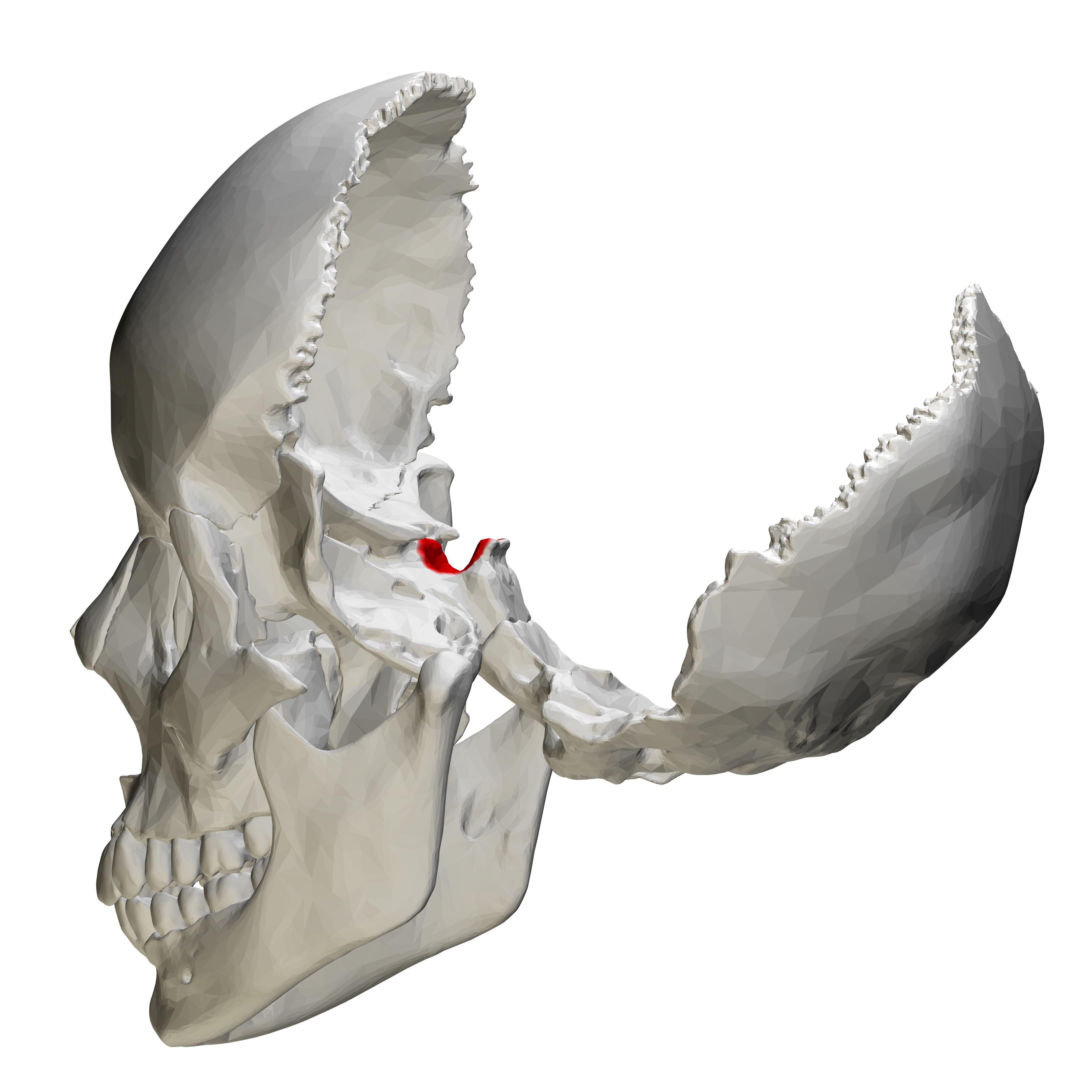 Pin de Stelios Daskalogiannis en cranio | Pinterest