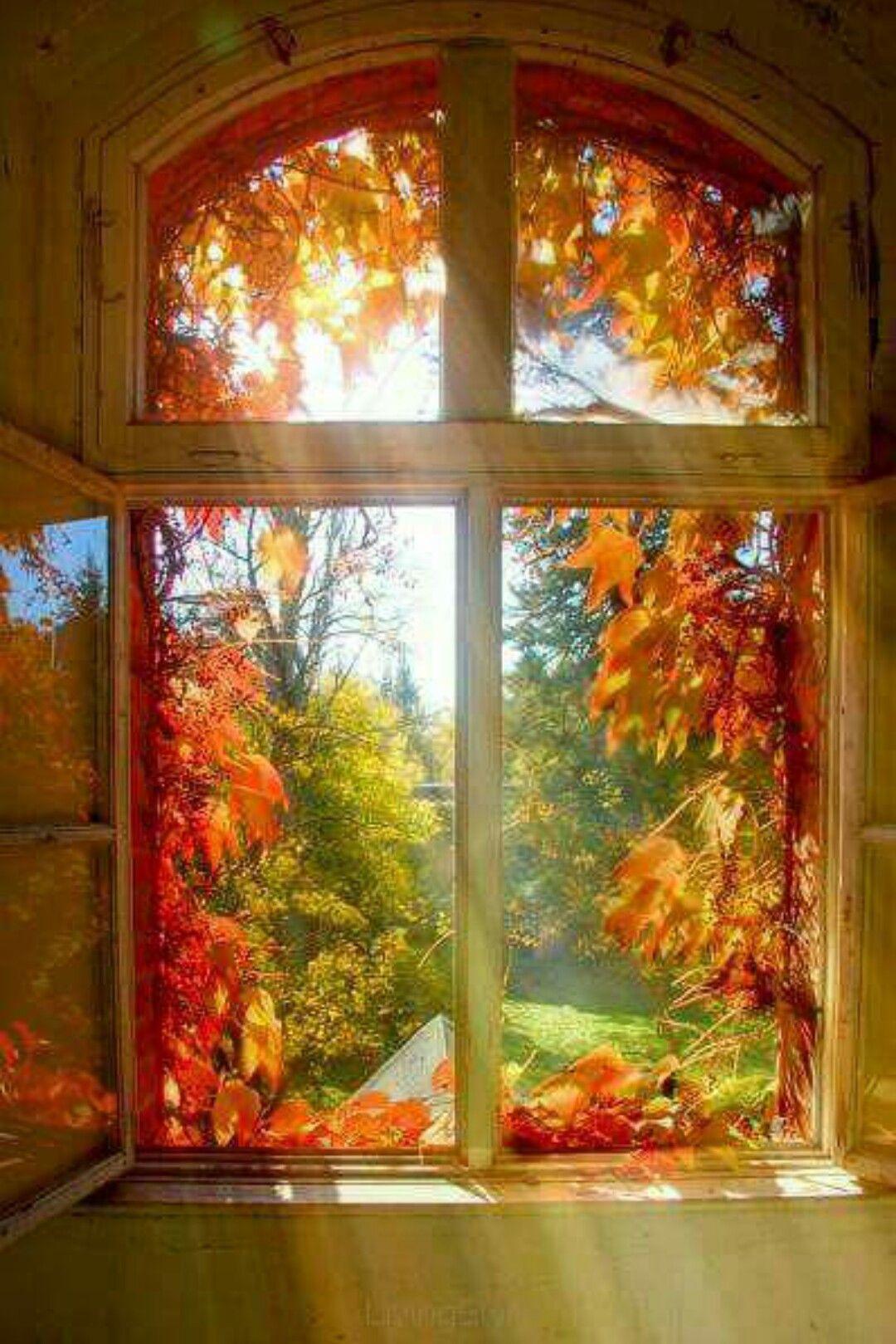 Okthatus pretty autumn pinterest autumn window and doors