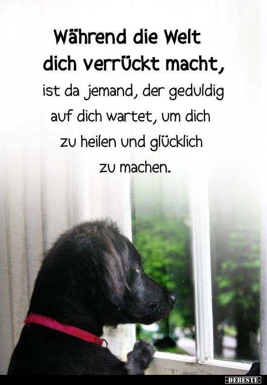 Wahrend Die Welt Dich Verruckt Macht Hundespruche Lustige Tierzitate Ich Liebe Hunde