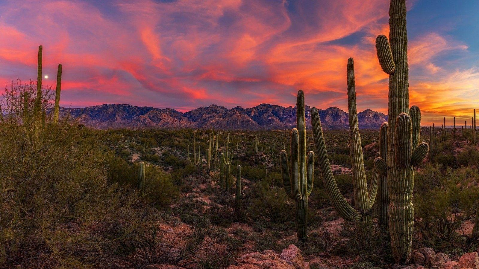 Cactus In The Desert Desert Photography Cool Landscapes Sunset Wallpaper Hd wallpaper cacti evening sunset desert