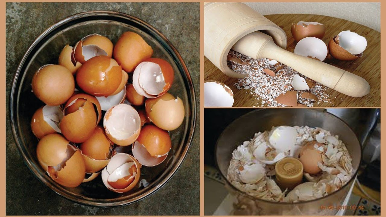 After Reading This You Will Never Throw Away Eggshells!<<