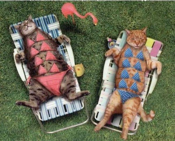 Top+25+des+animaux+en+bikini,+ou+le+web+mega+sexy