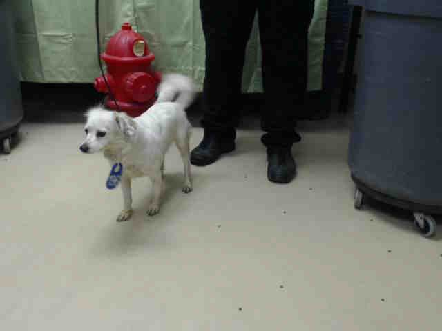 Snowball Houston Texas Petharbor Com Animal Shelter Adopt A