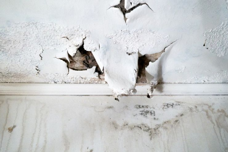 How long does it take for mold to grow after water damage