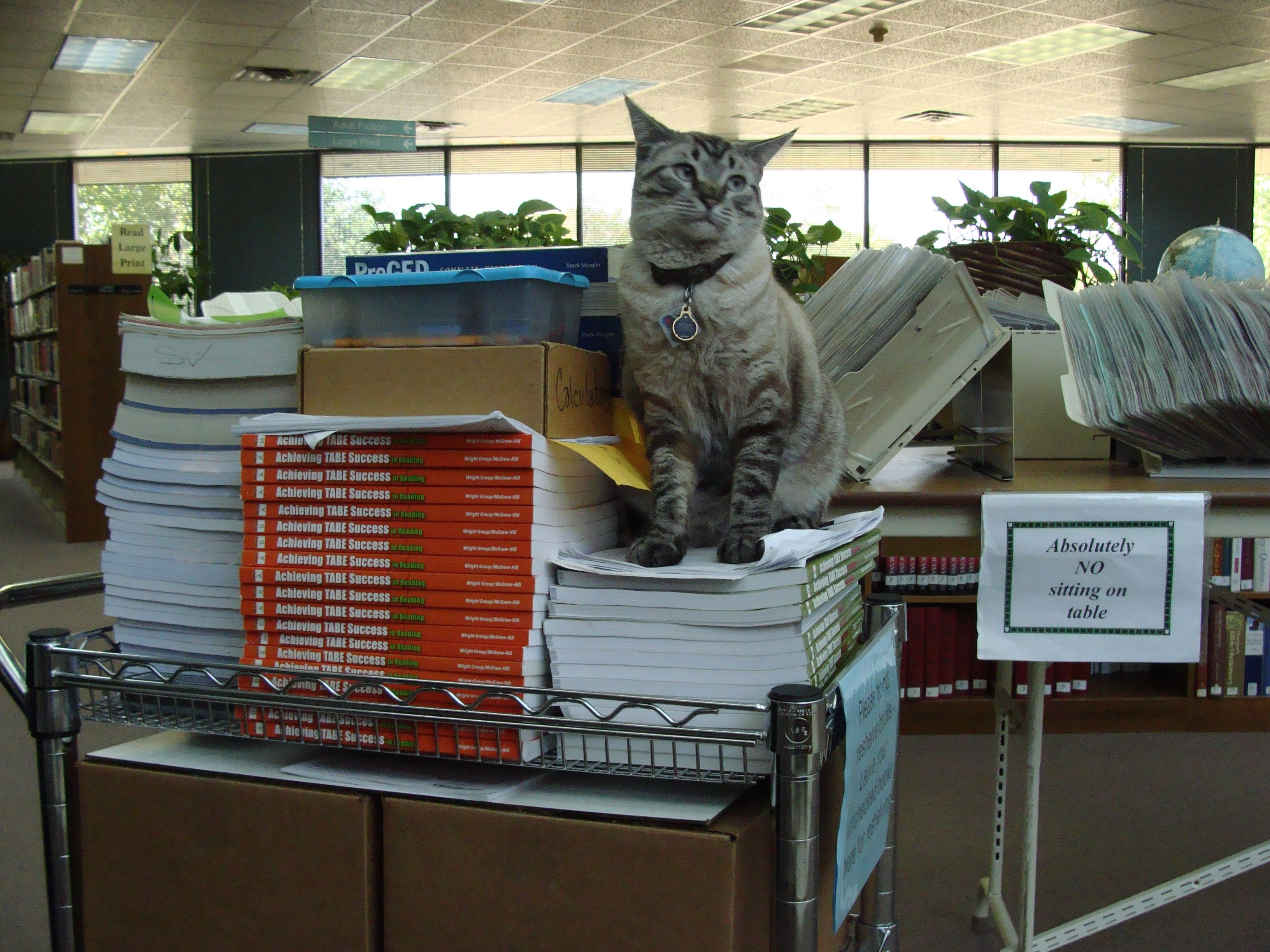 Take it from me Your local library needs a cat Cats