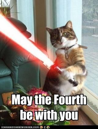 May The Fourth Be With You With Images Funny Cat Photos Happy