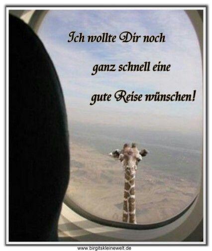 gute reise wünsche sprüche Urlaub | Zitate | Pinterest | Funny, Funny animals und Funny pictures gute reise wünsche sprüche
