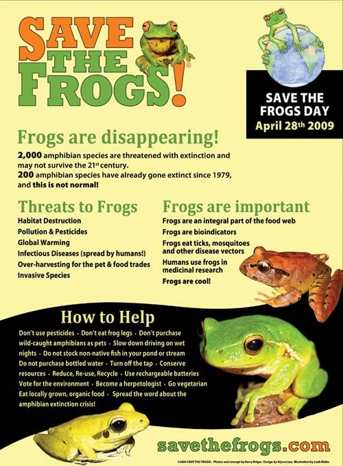 Endangered Frogs | informational posters | Pinterest | Kid, The o ...