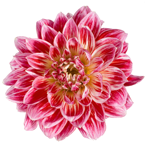 Pin By Emie On B L O O M Digital Flowers Transparent Flowers Flowers