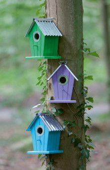 Last ned COLON fuglehus miljø