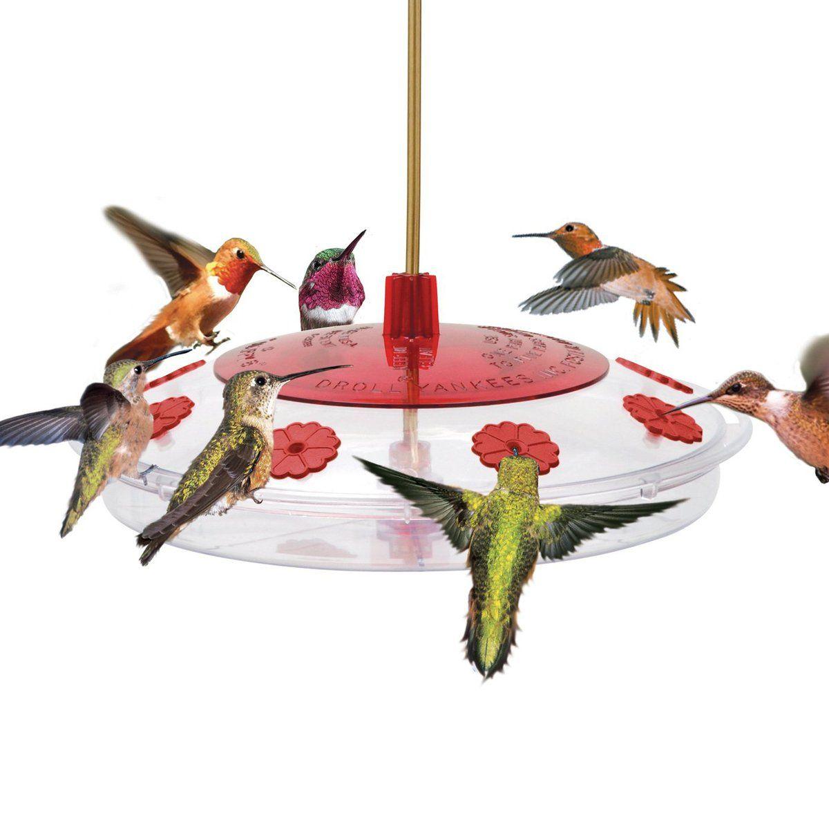 Bird feeders humming bird feeders bird feeders