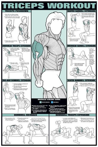 Tricep Workout Chart More