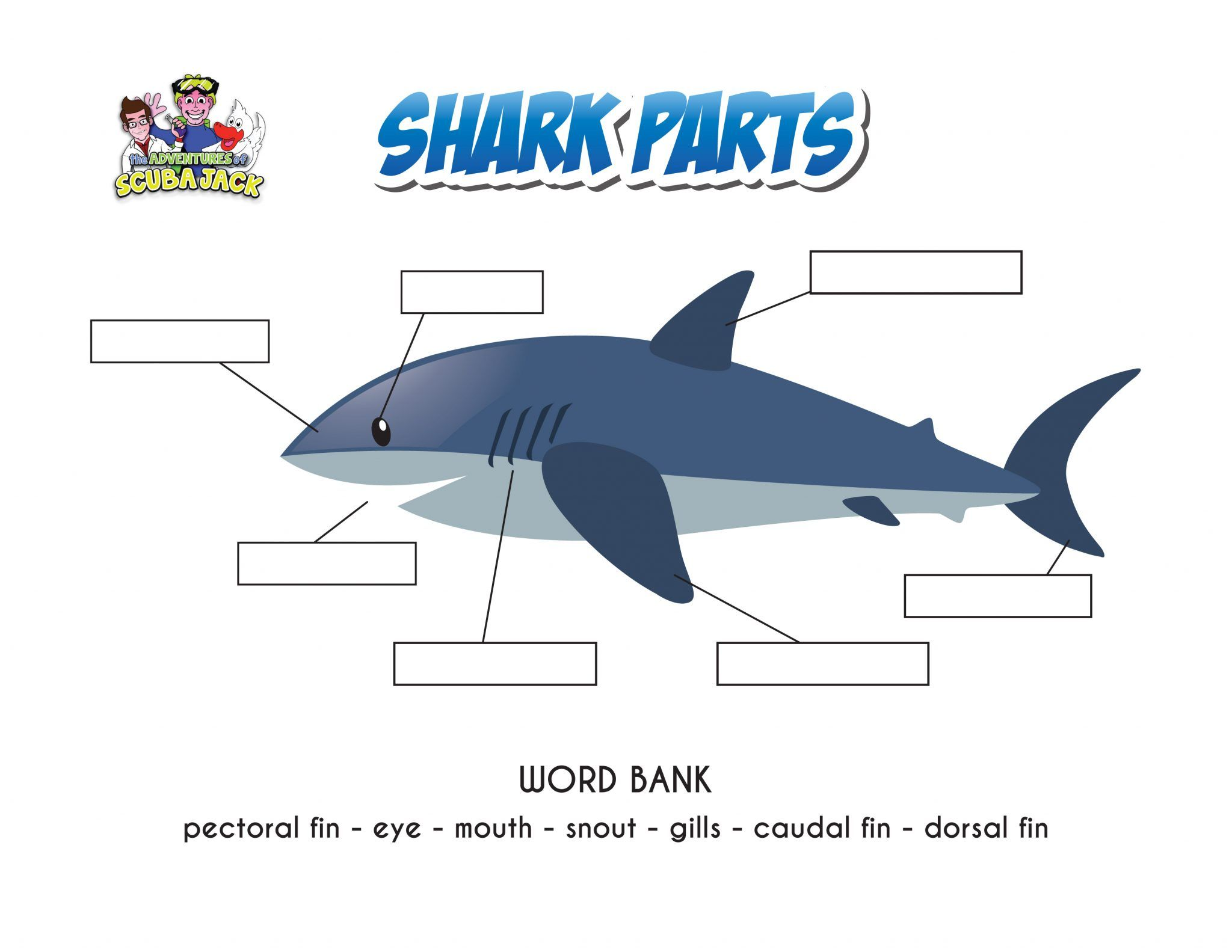 Sharks In