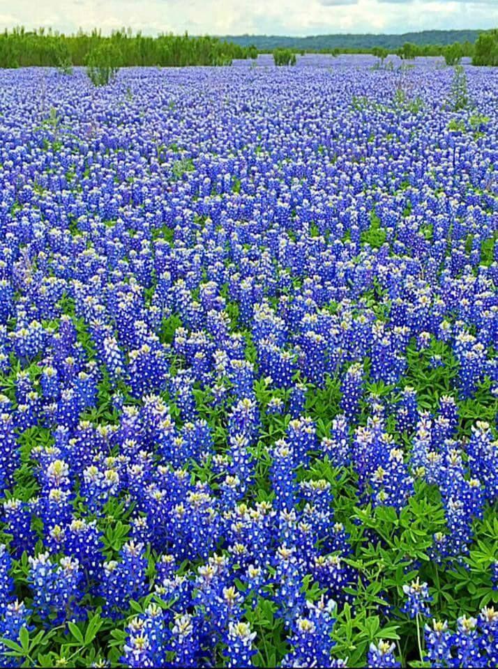 Beautiful absolutely beautiful! Texas