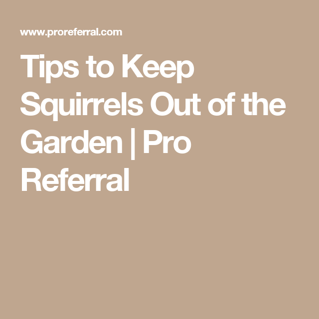 Tips to keep squirrels out of the garden pro referral - How do you keep squirrels out of your garden ...